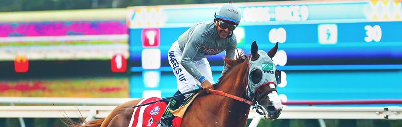 California Chrome Clear Classic Chalk