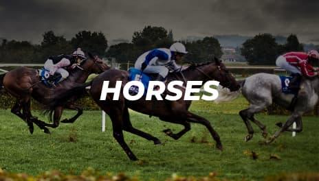 Bovada Horses